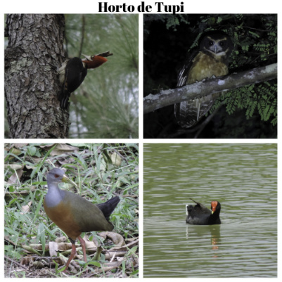 birdwatching-horto-tupi-pq