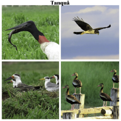 birdwatching-tanqua-pq