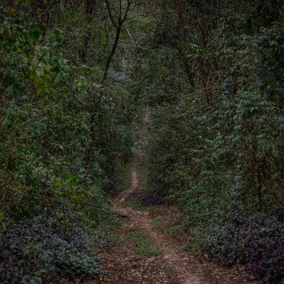 horto-florestal-de-tupi-capa-11