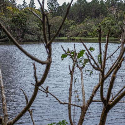 horto-florestal-de-tupi-capa-17