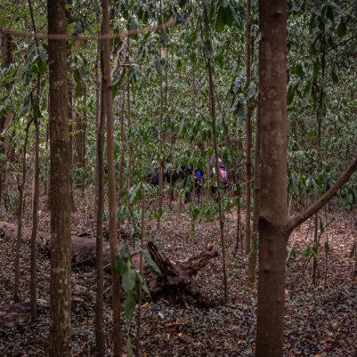 horto-florestal-de-tupi-capa-22
