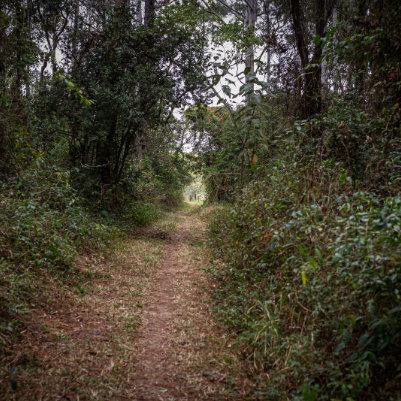 horto-florestal-de-tupi-capa-24