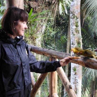 trilha-dos-tucanos-capa-07