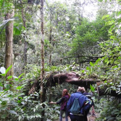 trilha-dos-tucanos-capa-12