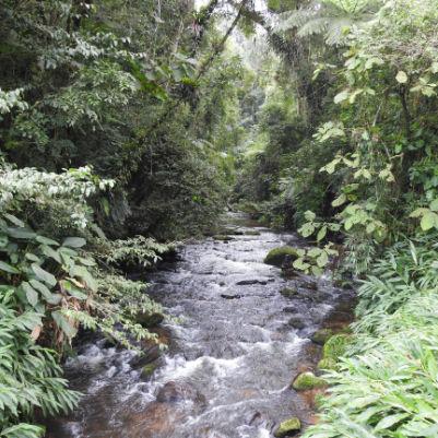 trilha-dos-tucanos-capa-13