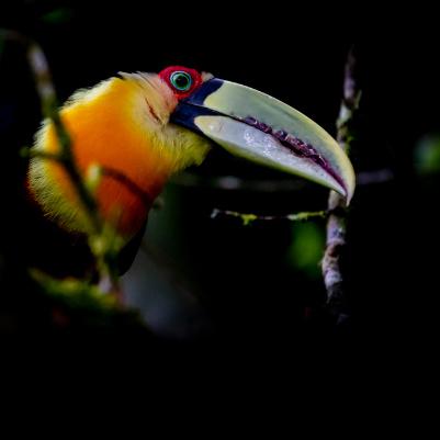 trilha-dos-tucanos-capa-18