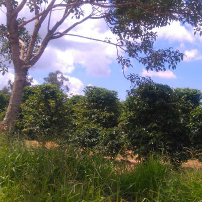 trilha-caminhada-caminhada-agromonges-22-m