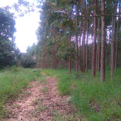 Capa-Trilha-Jardim-dos-Eucaliptos-2