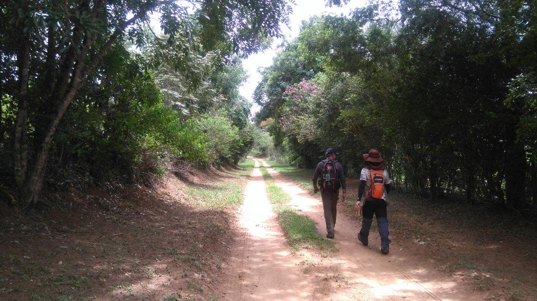 Trilha-Jardim-dos-Eucaliptos-26