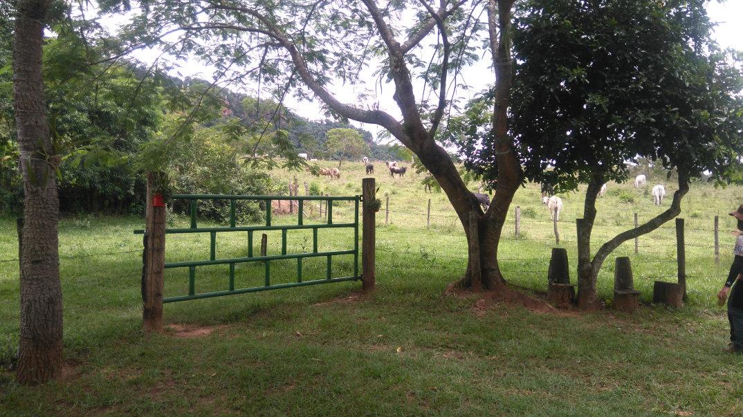 Trilha-Jardim-dos-Eucaliptos-27