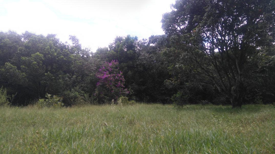 Trilha-Jardim-dos-Eucaliptos-28