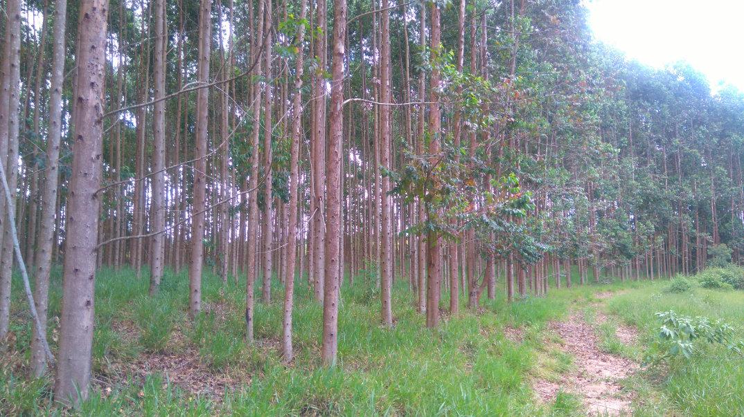 Trilha-Jardim-dos-Eucaliptos-29